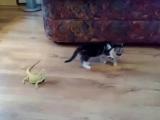 котенок и ящерицы.. знакомство